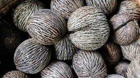 Dry Cerbera oddloam's seed Stock Image