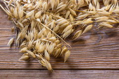 Dry cereal ears on vintage table. Decorative oat grains on brown wooden background royalty free stock photography