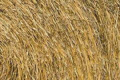 Dry chaff background. Dry grass pattern or dry chaff background Stock Photos