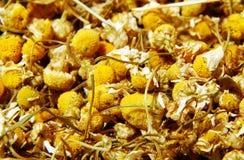Dry chamomile. Ready for tea Stock Photos