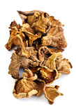 Dry chanterelle mushrooms Stock Photos