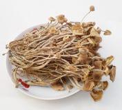 Dry Chaxingu Royalty Free Stock Image
