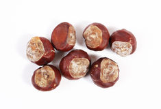 Dry chestnuts Stock Photos