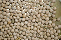 Dry chickpea Royalty Free Stock Photography