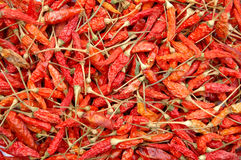 Dry chili Stock Photography