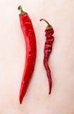 Dry chili and fresh chili Stock Photos