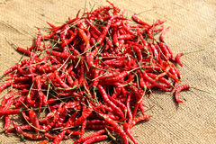 Dry chili on gunny bag Stock Photography