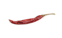 Dry chili isolated. Dry chili isolated on white background Stock Photography