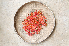 Dry chili Stock Photography