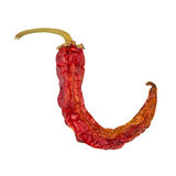 Dry chili pepper isolated. Dried vegetable. Royalty Free Stock Photo