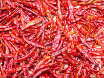 Dry chili pepper Stock Images
