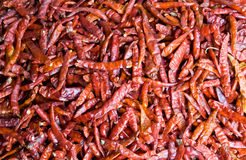 Dry chilli Royalty Free Stock Image