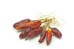 Dry Chilly. Dry small chilly tied with white thread Stock Images