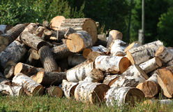 Dry chopped firewood logs in pile. Royalty Free Stock Photo