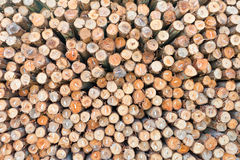 Dry chopped firewood logs stacked up Stock Photo