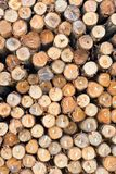 Dry chopped firewood logs stacked up Royalty Free Stock Images