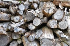 Dry chopped firewood logs Stock Images