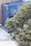 Dry Christmas Trees Royalty Free Stock Image