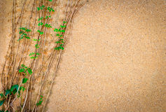 Dry climbing plants on wall. Dry climbing plants on expose aggregate finished wall Stock Image