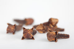 Dry cloves on white background, closeup. Cloves improve digestion Stock Photos