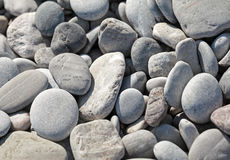 Dry coastal gray stones Stock Images