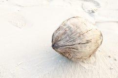 The dry cocoanut. On the beach royalty free stock photos