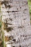 Dry coconut bark tree Stock Photos