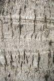 Dry coconut bark tree texture Royalty Free Stock Photography