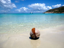 Dry coconut on the beach Royalty Free Stock Images