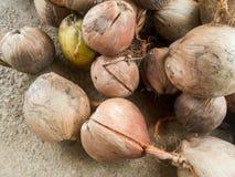 Dry coconut Stock Photo