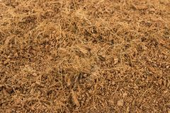 Dry coconut coir. Stock Photos