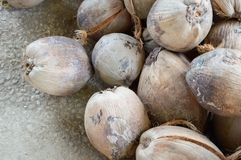 Dry coconut fruit Stock Photography