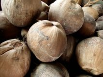 Dry coconut Royalty Free Stock Image