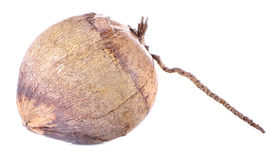 Dry coconut isolated on white background Royalty Free Stock Photography