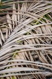 Dry coconut leaves Royalty Free Stock Photography