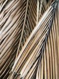 Dry coconut palm leaf background Stock Photo