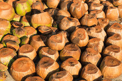 Dry coconut Stock Photos