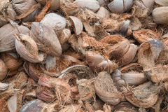 Dry coconut shells. Dray coconut shells in thailand Stock Image
