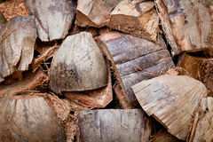 Dry coconut skin Stock Images