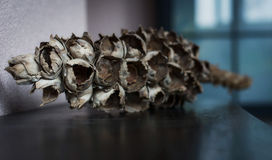 Dry coconut tree branch Stock Image