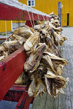 Dry cod fish - Norway Lofoten Stock Photos