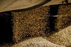 Coffee wallpaper. Dry coffee bean rain stock photography