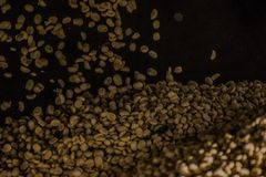 Coffee wallpaper. Dry coffee bean rain royalty free stock image