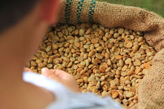 Dry coffee beans Royalty Free Stock Photo