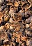 Dry coir Stock Photo