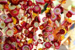 Dry colorful flora Royalty Free Stock Photo
