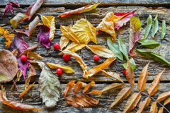 Dry colorful leaves on a wooden table Stock Images