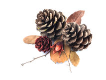Dry cone pine, leaf and flower Royalty Free Stock Photo