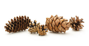 Dry cones on the white background Royalty Free Stock Photography