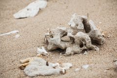 Dry coral parts at beach Stock Images